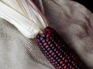 fall corn